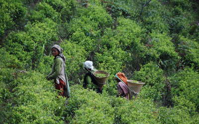 Kjiang and her friends work in the vast tea plantations embedded in the fabric of the East Khasi hills.