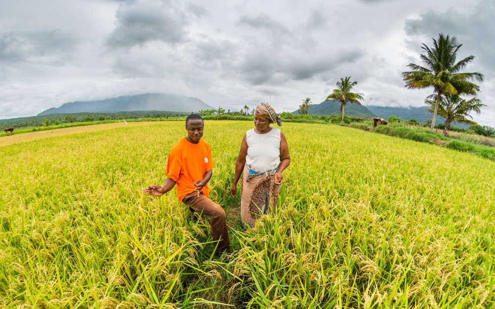 Farmer Nagenjwa Naftali, 55, looks over her lush field of rice. The money this mom earns from the sale of this crop will insure her five children's education.
