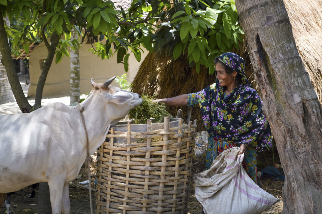 World Vision gave Morjina Kaatun, a mother of three in Bangladesh, two goats to breed in May 2013. After selling 11 of the goats' offspring, she earned 23,000 taka ($300). Morjina bought schoolbooks for her daughters, a male calf, and a dairy cow, which produces $1 worth of milk every day. And she still has 7 goats left. Morjina also invested in chickens, she cultivates vegetables to provide proper nutrition for her two daughters, and she produces jute to sell as fuel.