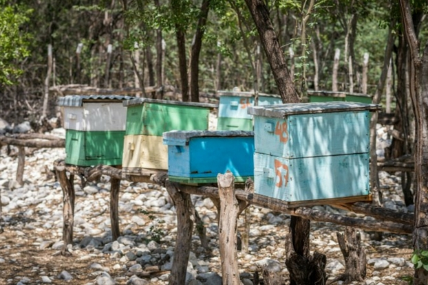 In the Dominican Republic, we're helping farmers earn better incomes by raising bees and producing honey. Hear their story and try a recipe for honey flan!