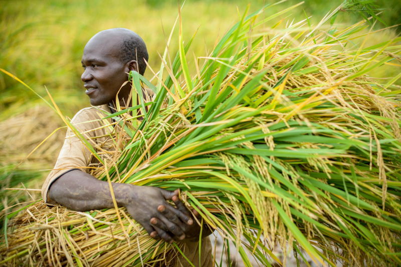 As we celebrate Thanksgiving, also give thanks for the Lord's blessings in the lives of farmers World Vision partners with around the world.