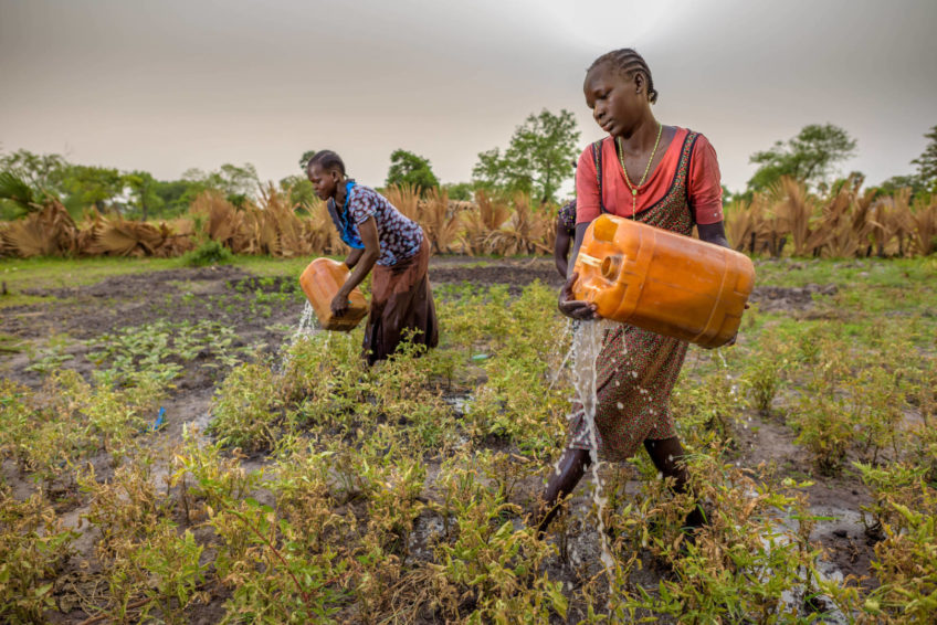 Two South Sudanese women water a vegetable garden.