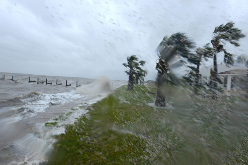 Palm trees bend as Hurricane Harvey lands in Rockport, Texas.