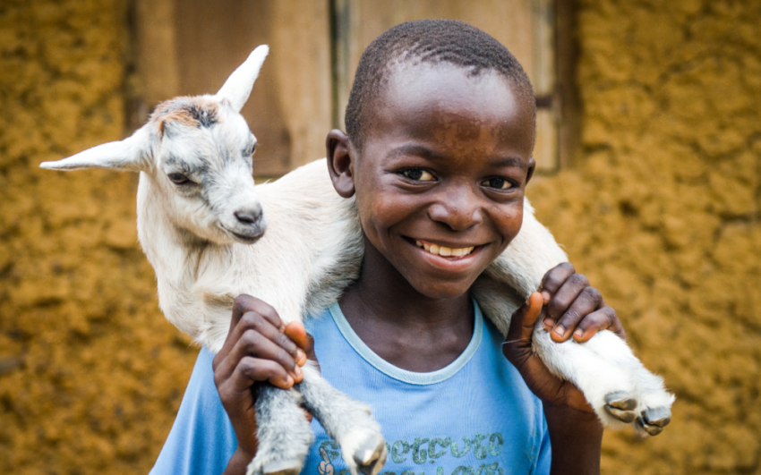 Goats help a boy in Sierra Leone pay for school.