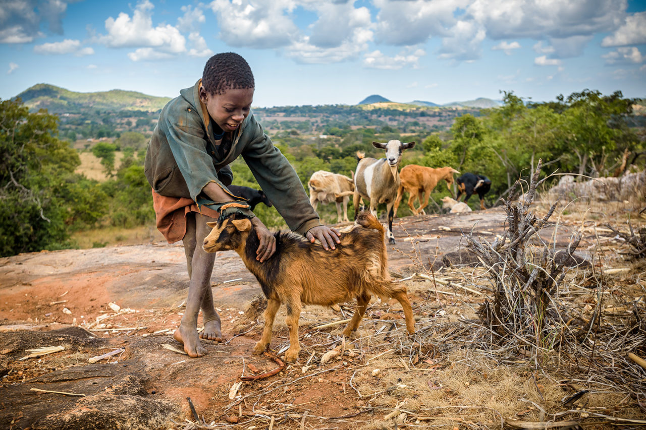 Grandsons like 10-year-old Kizwell are in charge of tending the goats.