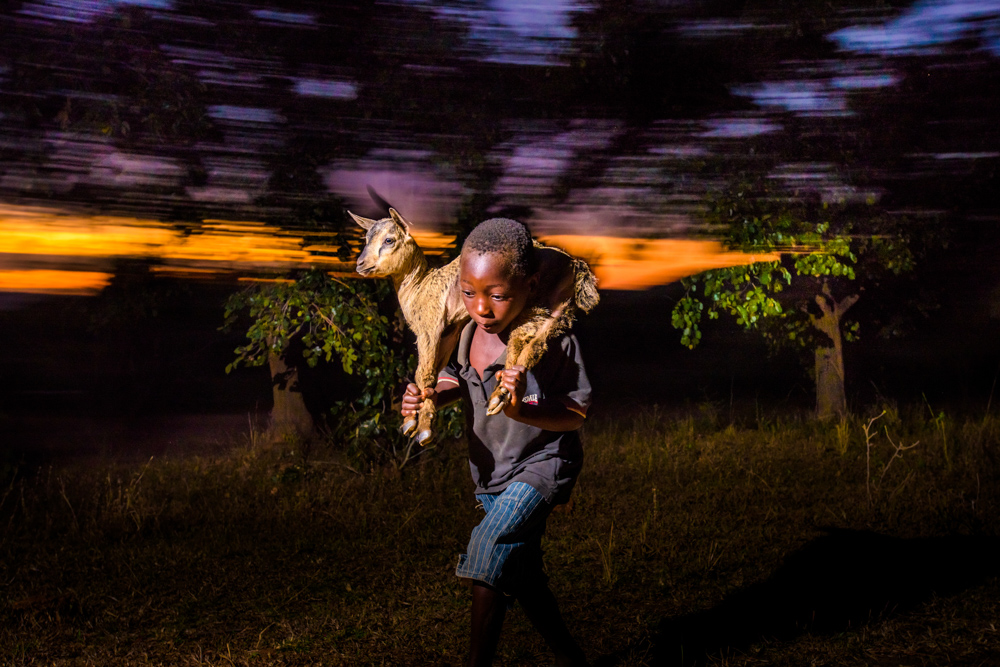 Zambian boy carrying goat on his back.