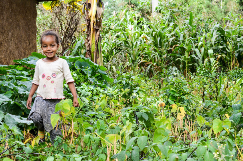 Four-year-old Medhnit eats fresh vegetables from her family's garden every day. Her mother is a member of a World Vision-supported gardening and savings club organized to stave off hunger in an area of Ethiopia that is struggling with a food crisis. The club ensures families have enough food and the skills to garden. Extra produce is sold and the money earned goes into thea savings club. In this coffee-growing region, drought slashed the coffee harvest in half, sending many families into extreme poverty. (©2017 World Vision/photo by Mark Nonkes)