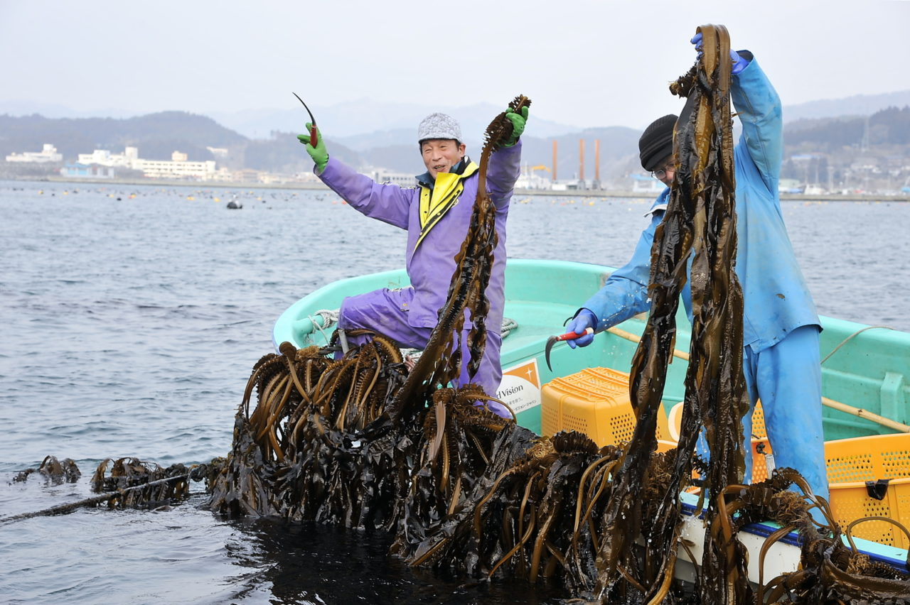 Japan tsunami. Fishermen who lost their boats and docks to the tsunami developed a new income cultivating wakame seaweed with boats provided by World Vision. (©2012 World Vision/photo by Kei Itoh)