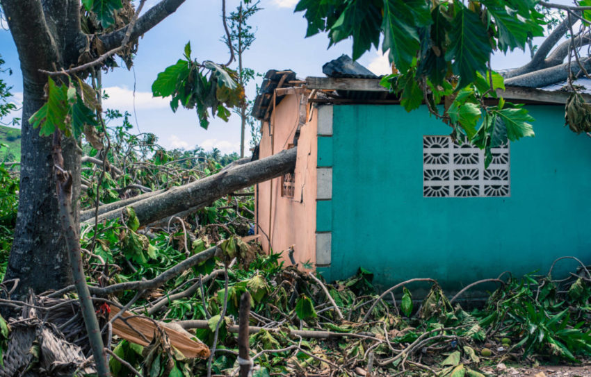 A home sturdy enough to withstand Hurricane Matthew's high winds was damaged instead by a falling tree. In wooded areas of the southern coast of Haiti, many trees were uprooted from flooded ground or snapped like matchsticks by Hurricane Matthew's 140-mph-winds. (©2016 Guy Vital-Herne/World Vision)