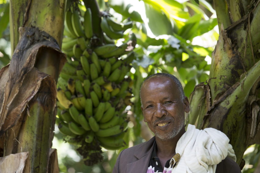 Abebe Aregaw lost a daughter and his crops during the famine. Now he is a model farmer who grows fruit.