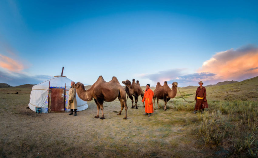 World Vision staff in Mongolia stand with Bactrian camels.