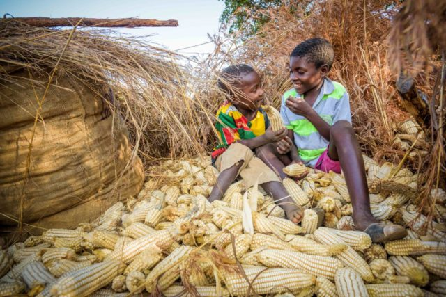 Two children sit on a pile of maize in Zambia.