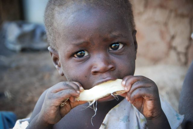 Hunger forced Cossy, 18 months, to eat the bitter tasting, watery wild root in Zambia.