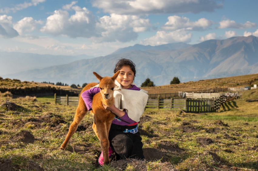 In the remote Andean highlands of Central Ecuador, Gift Catalog alpacas are helping communities raise themselves out of poverty.