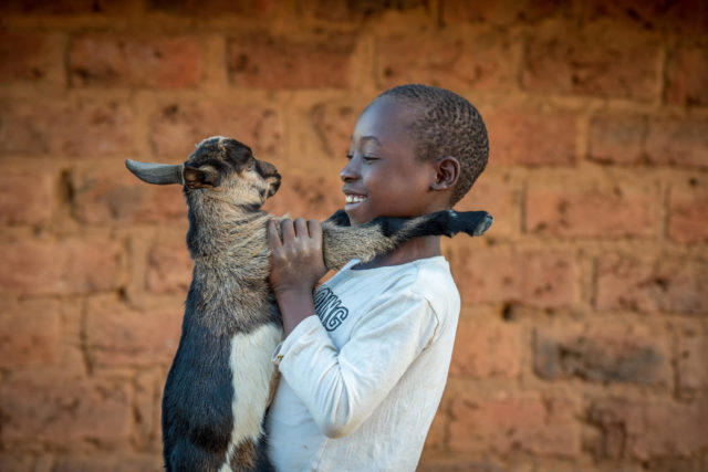 To combat drought in Zambia's Southern Province, families are turning to livestock, particularly rearing goats. Outside his family home in Zambia, Nathan Choobwe, 9, holds a young goat, part of his family's growing herd.