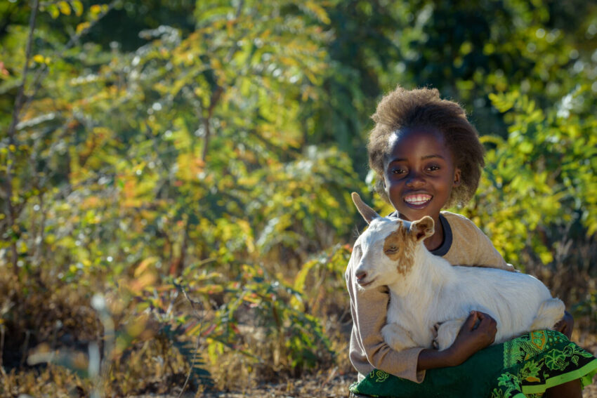 Goats have helped created a better life for 7-year-old Loveness and her family.