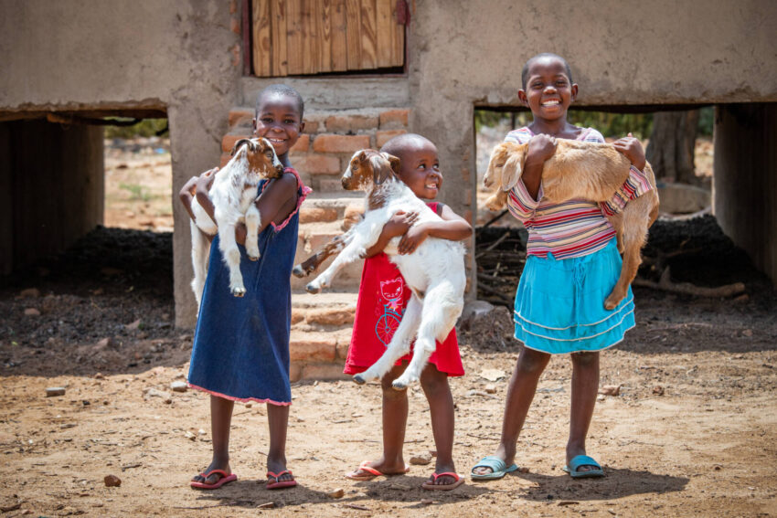 This Christmas, find gifts that pair the recipient's personality with animals from the World Vision Gift Catalog — like goats — and honor them by donating one to help a family in need.