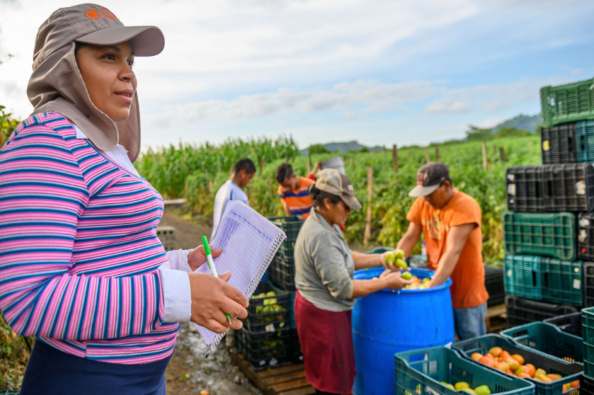Kenia in Honduras oversees the harvest and preparation for market of the family's abundant tomato crop.