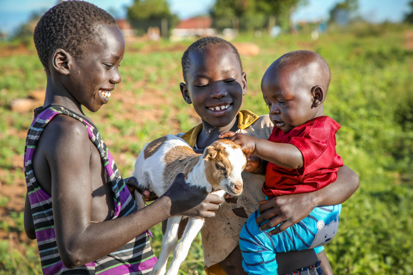 Mustafa and his siblings play with one of their family's goats near their home in a Ugandan refugee settlement.