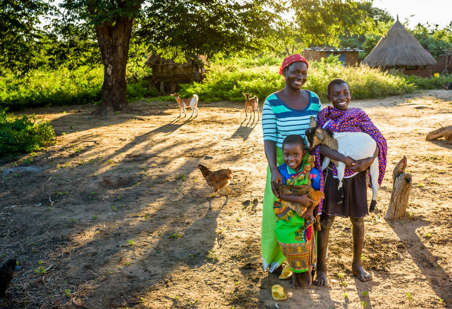 Chickens and goats from World Vision's Gift Catalog and child sponsorship set a family in Zambia on a path to prosperity.