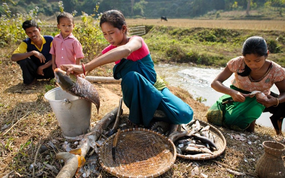 Sakuntola Ronzhing, 28, cleans fish from a pond stocked and maintained by her women's self-help Group in Amri, India.