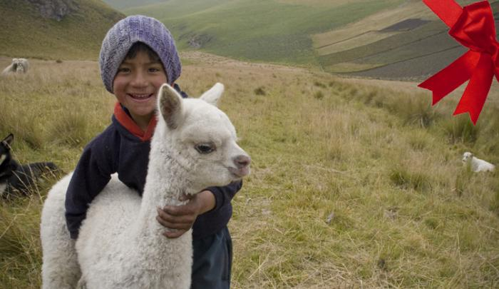 Shoppers can give an animal such as an alpaca to a family in need.