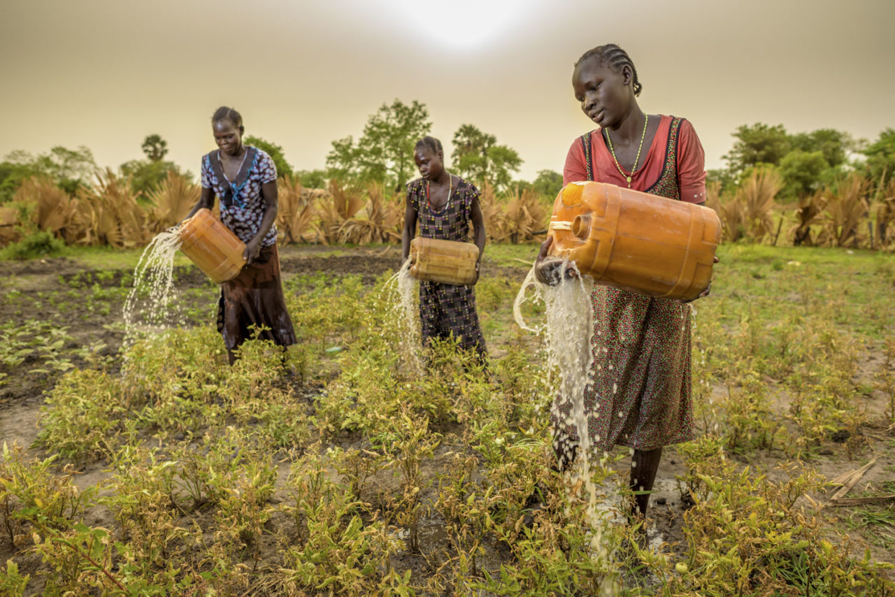Moms water their vegetable gardens early in a Saturday morning in Kuajok, Warrup State, South Sudan.