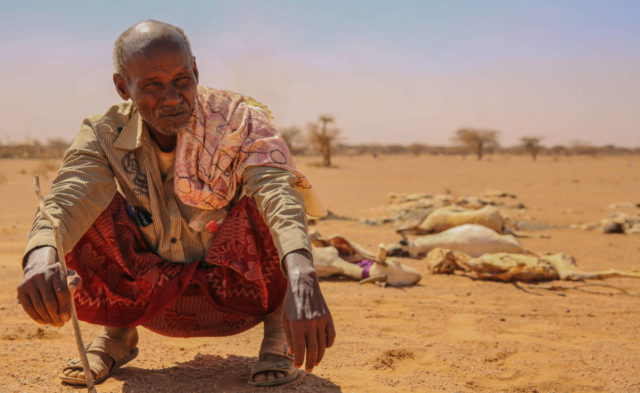 Saîd, a farmer in Somaliland, is desperate because he has lost most of his livestock. In Somalia, famine looms. He has 14 children and is worried that if his goats keep dying, his children will be next. (©2017 World Vision/photo by Stefanie Glinski)