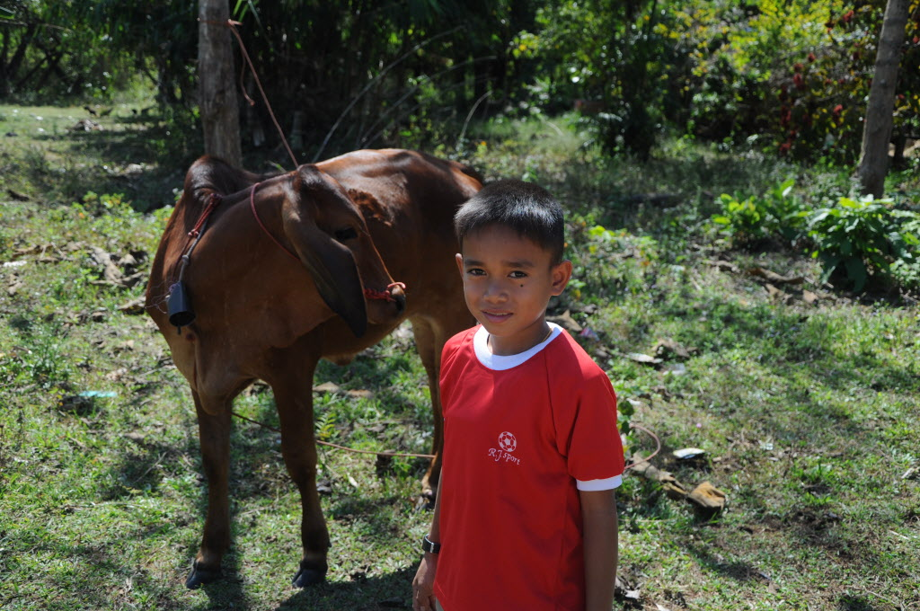 Sponsored child in Thailand stands with the cow his family got from the World Vision Gift Catalog