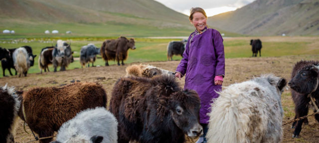 12-year-old Mongolian girl with sheep